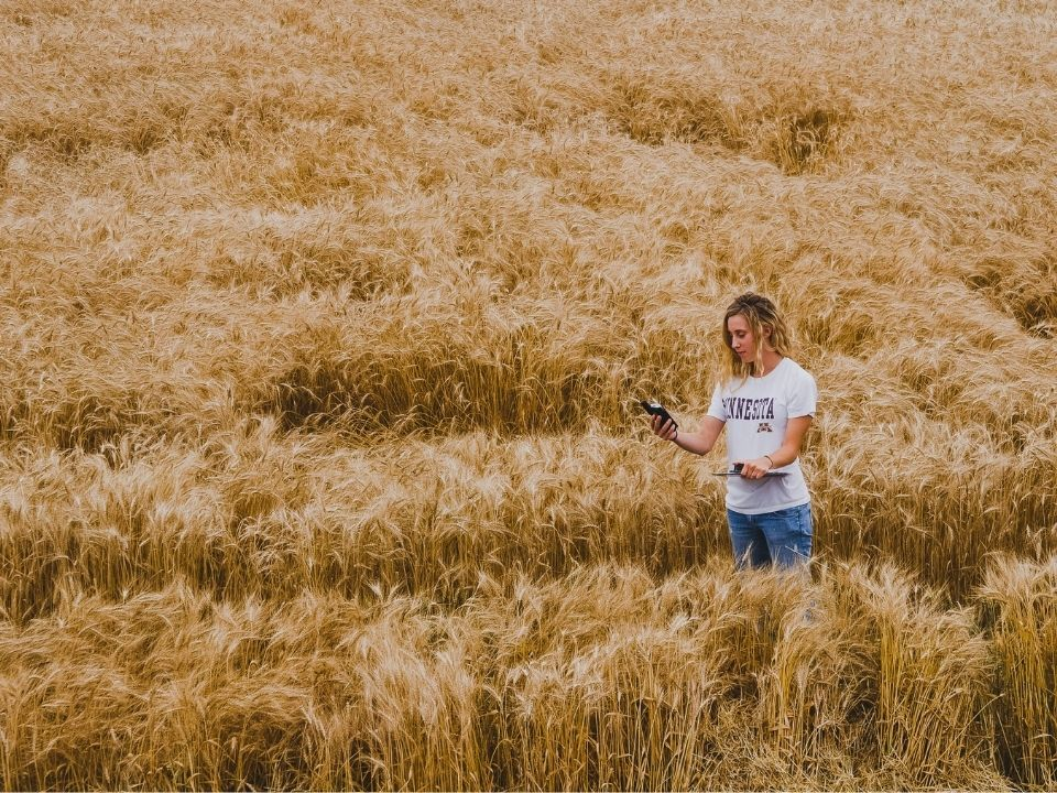 student in wheat field