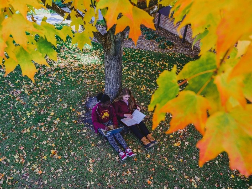 reading by tree