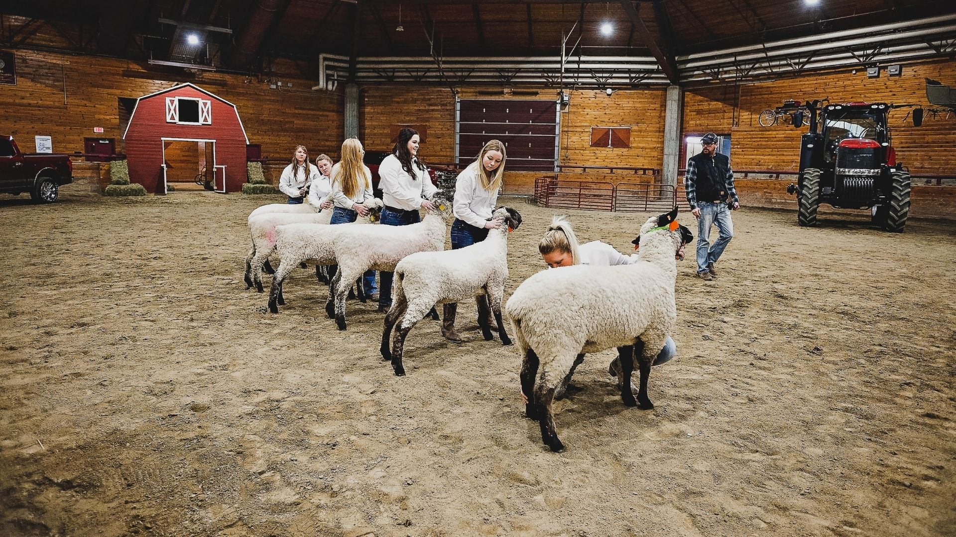 students with sheep