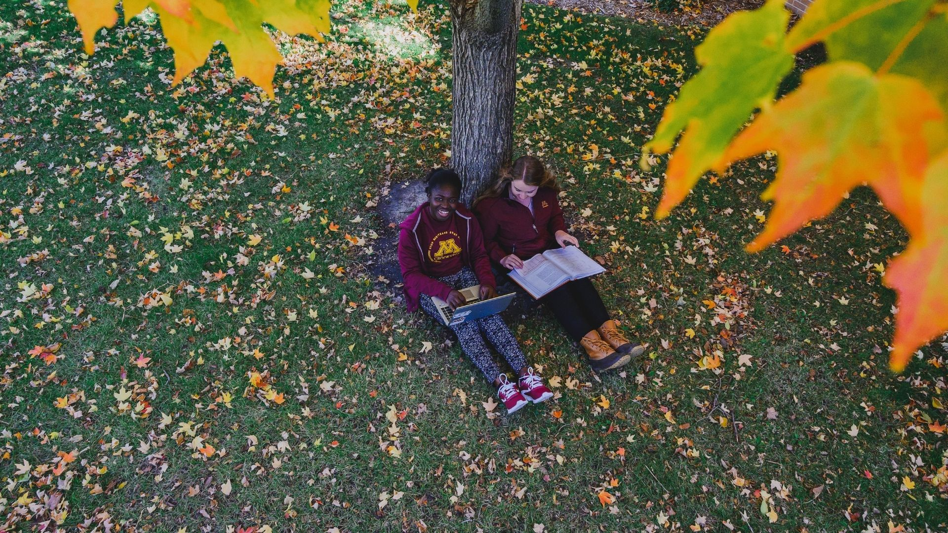 studying by trees