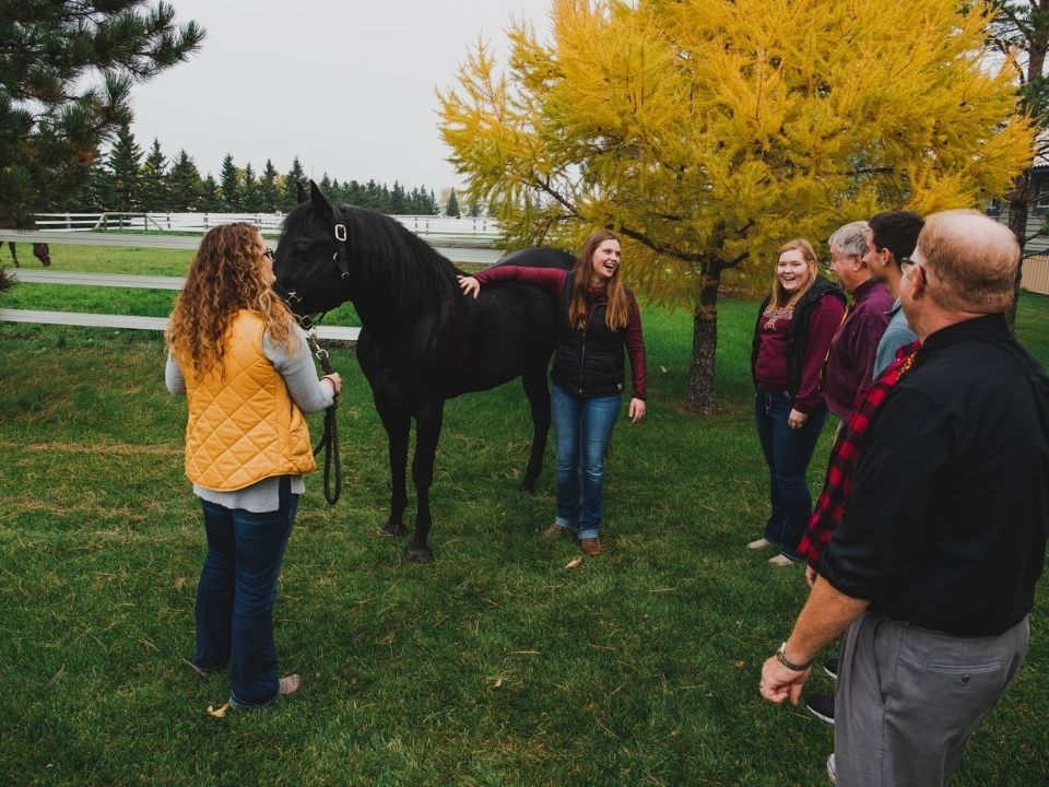 class looking at a horse