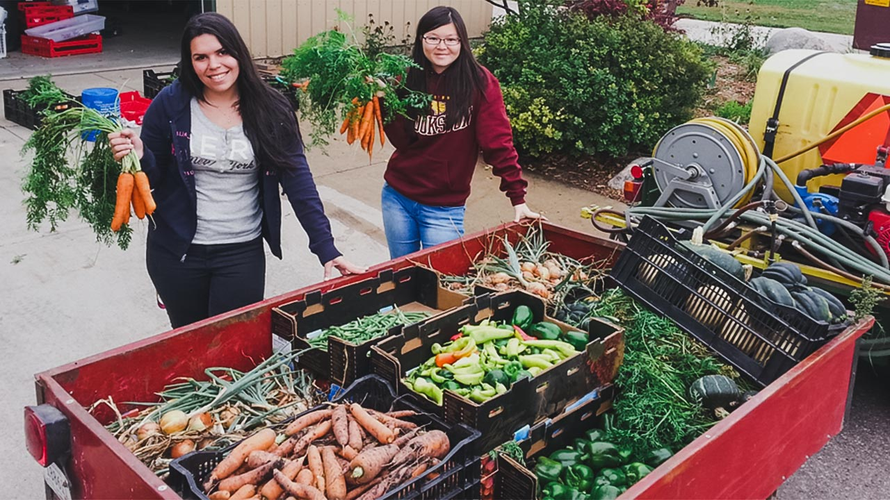 Students harvesting vegetables in the Campus Garden