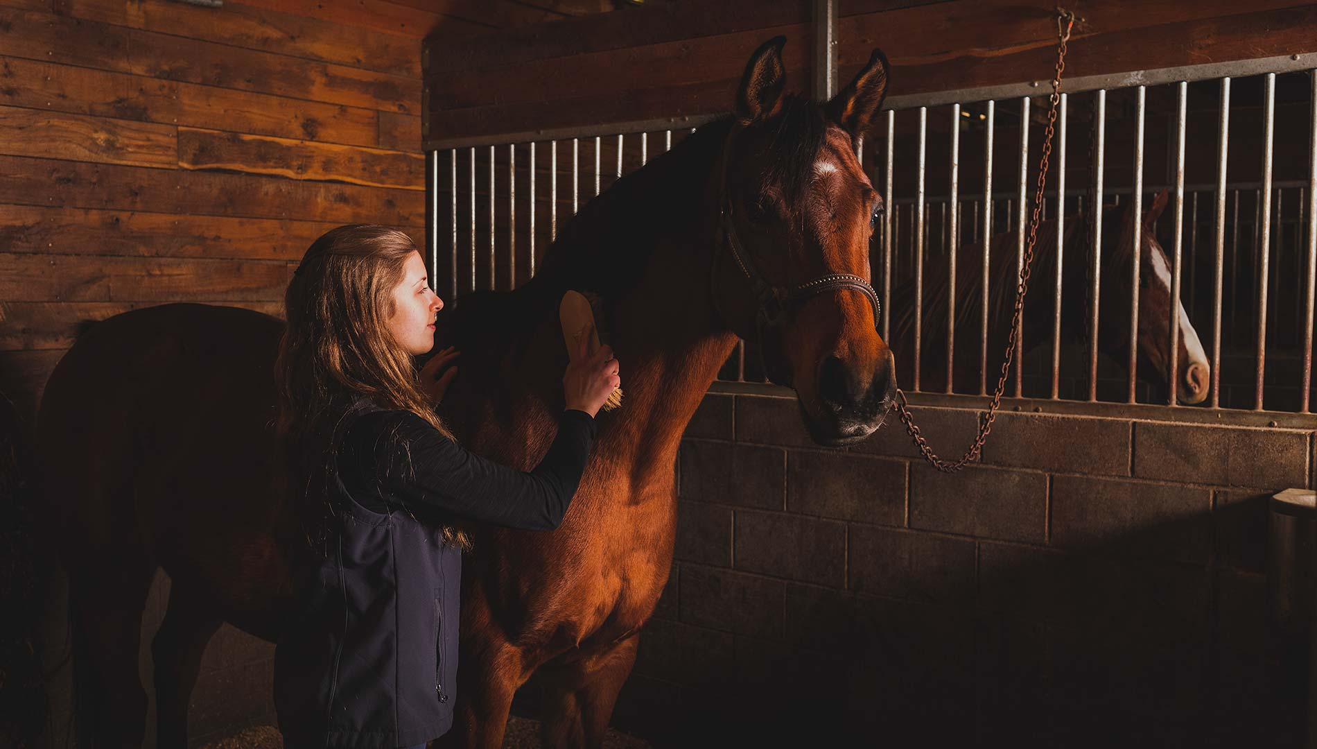 Student taking care of a horse in the stables
