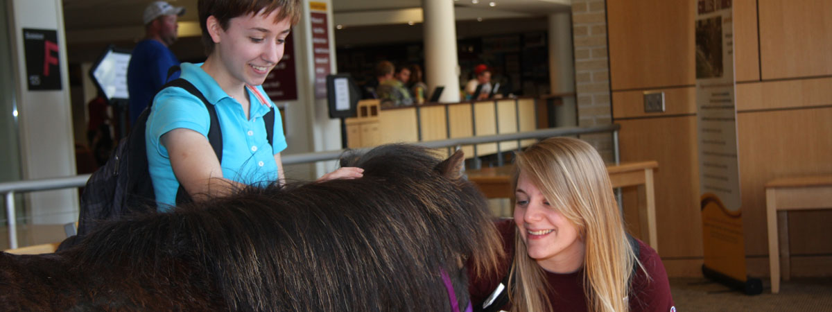 Students petting a pony
