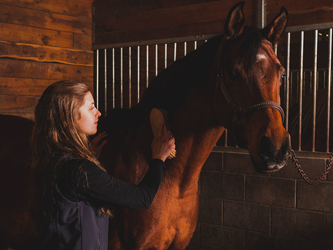Student brushing a horse in a stall