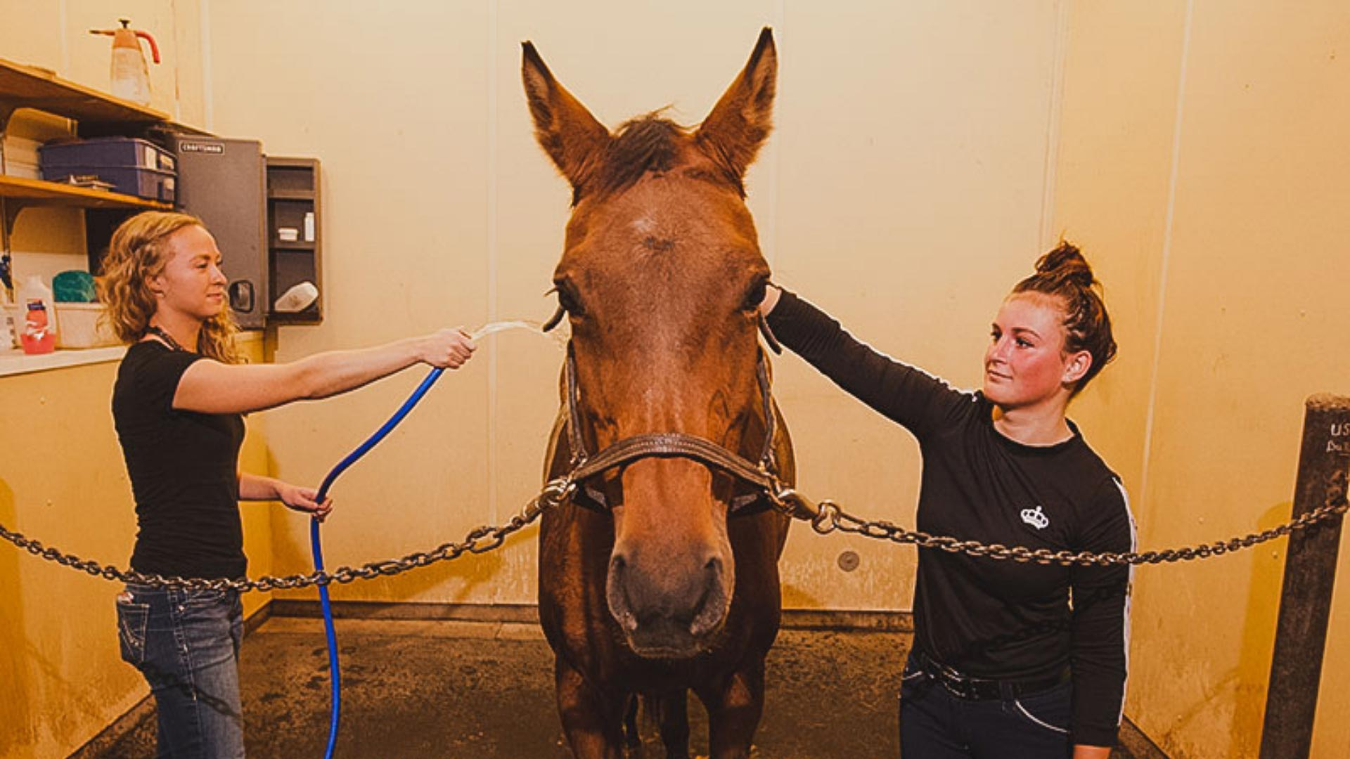 Two students washing a horse